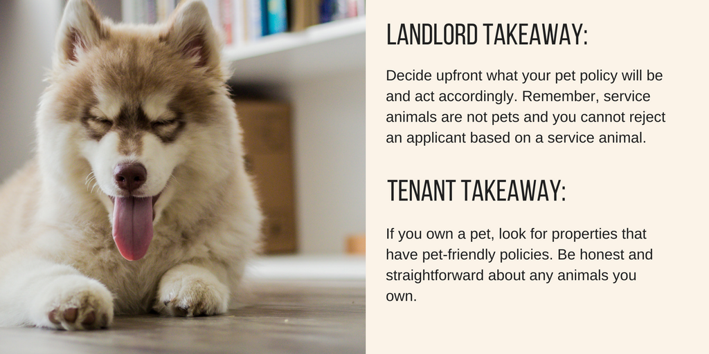 landlord tenant takeaway text about rental pet policies with image of dog